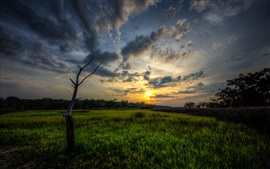 Sunset, field, clouds, trees, dusk