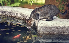 Preview wallpaper Thirsty cat, water, fish