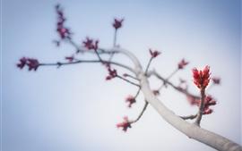 Tree branch, stem, buds, sky