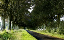 Preview wallpaper Trees, road, grass, nature landscape