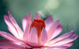 Preview wallpaper Water lily flower macro photography, pink petals