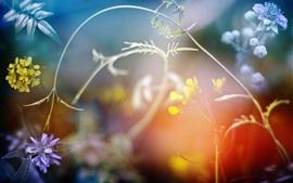Полевые цветы, растения, боке