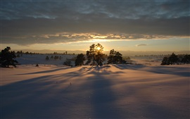 Preview wallpaper Winter morning, sunrise, snow, trees, shadow