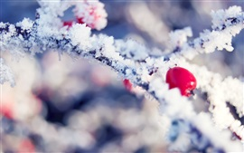 Winter, snow, frost, ice crystals, twigs, red berries