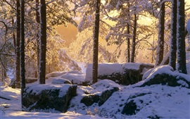 Preview wallpaper Winter, thick snow, forest, trees, sunshine