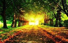 Preview wallpaper Autumn beautiful landscape, road, trees, grass, sun rays