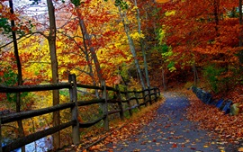 Preview wallpaper Autumn park, trees, fence, road, falling leaves