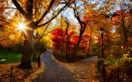 Preview wallpaper Autumn park, trees, yellow leaves, sunlight, morning