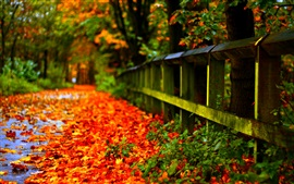 Autumn red leaves on ground, fence, trees, blur background