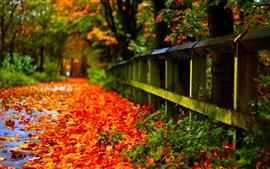 Осенние красные листья на земле, забор, деревья, размытие фона
