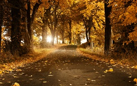 Preview wallpaper Autumn, trees, road, yellow leaves, sun rays