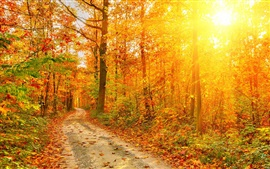 bosque de otoño, árboles, trayectoria, los rayos de sol hermosas