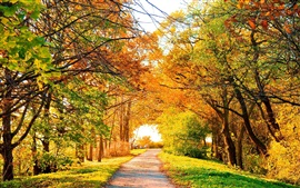 Beautiful autumn park, trees, path, yellow leaves