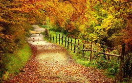 Preview wallpaper Beautiful autumn scenery, trees, yellow leaves, path