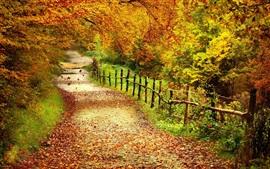 Paisaje hermoso del otoño, árboles, hojas amarillas, camino