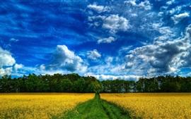 Красивое поле фермы, природа, деревья, облака