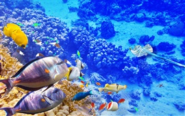 Preview wallpaper Blue sea underwater world, coral, tropical fishes