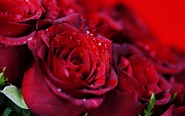 Preview wallpaper Bouquet red rose, water droplets
