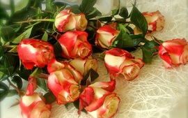 Bouquet roses, white red petals