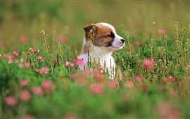Preview wallpaper Cute puppy, grass, flowers, blurry