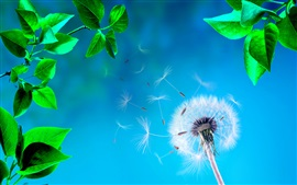 Preview wallpaper Dandelion, green leaves, blue background