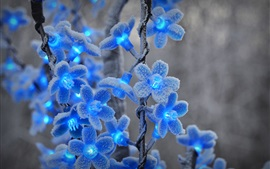 Festival lights, blue flowers