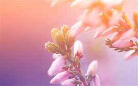 Preview wallpaper Flower buds, blur background