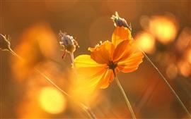 Flower under sun, glare