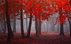 Preview wallpaper Forest in autumn, red leaves, trees, fog