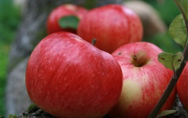 預覽桌布 水果收穫,紅蘋果