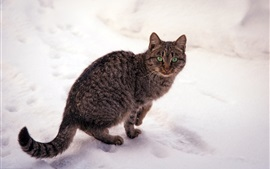 Preview wallpaper Gray striped cat, green eyes, winter, snow