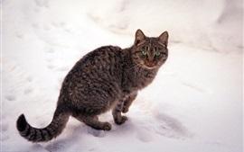 Gato rayado gris, ojos verdes, invierno, nieve