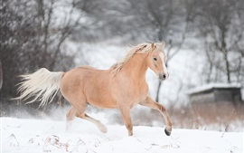 Preview wallpaper Horse running in winter