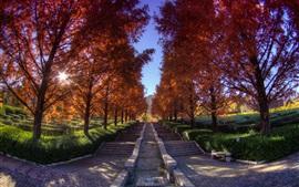 Japón, Parque, árboles, hojas del rojo, escaleras