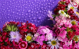 Preview wallpaper Lot of flowers, water droplets