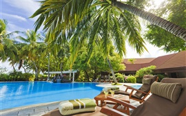 Maldives, palm trees, resort, sun loungers, pool