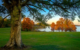 Preview wallpaper Morning, trees, autumn, grass, lake