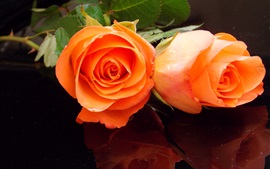 Preview wallpaper Orange rose flowers, bouquet, water drops
