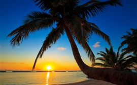 Preview wallpaper Palma, Maldives, sunset, beach, sea, palm tree
