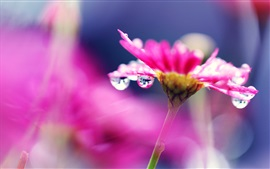 Pink flower macro photography, bright, water droplets, blurry