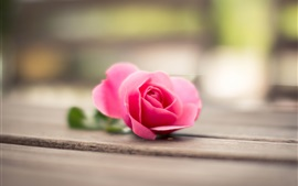 Preview wallpaper Pink rose, wood board, bokeh