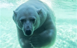 Preview wallpaper Polar bear underwater