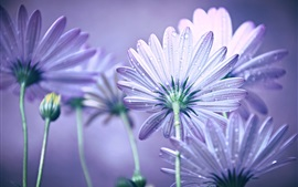 Preview wallpaper Purple petals flowers, dew