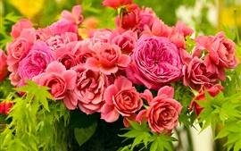 Красные цветы пиона