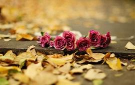 レッドは、地面に花をバラ
