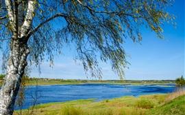 Russia nature landscape, river, birch, grass, blue sky