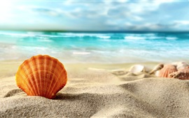 Shell, beach, sands, sea