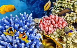 Preview wallpaper Tropical fishes, coral, underwater, sea animals