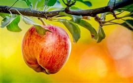 Прут, красное яблоко, листья