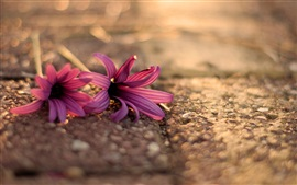 Two pink flowers on the ground